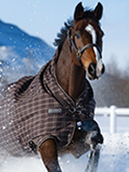Winter Rugs at Ooteman Equestrian